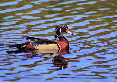 Featured Tapestry Designs - Wood Duck by John Burk