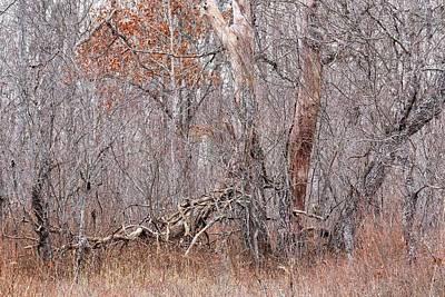 Photograph - Wood Rust by Mark Bear