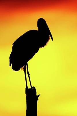 Lori A Cash Royalty-Free and Rights-Managed Images - Wood Stork Silhouette by Lori A Cash
