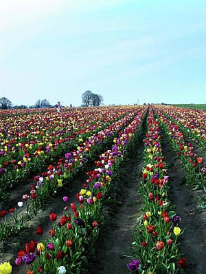 Photograph - Wooden Shoe Tulip Farm by Debbie Smith