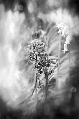 Abstract Graphics Rights Managed Images - Woodland Bluebells Black and White  Royalty-Free Image by Carol Japp