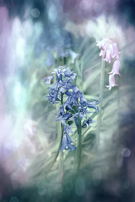 Abstract Graphics Rights Managed Images - Woodland Bluebells Pastel Shades  Royalty-Free Image by Carol Japp