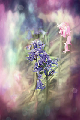 Abstract Graphics Rights Managed Images - Woodland Bluebells Shades of Pink  Royalty-Free Image by Carol Japp