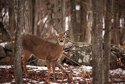 Angels And Cherubs - Woodland Deer by Karol Livote