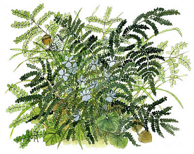 Painting - Woodland Ferns with Butterfly and Violets by Laurie Rohner
