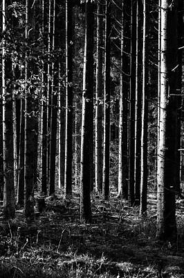 Photograph - Woodland by Mike Santis