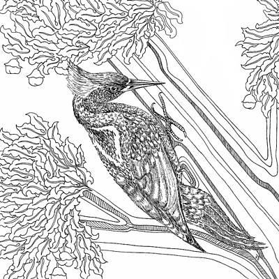 Animals Drawings - Woodpecker by Jennifer Wheatley Wolf