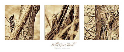 Keith Richards - Woodpecker Triptych by Francis Sullivan