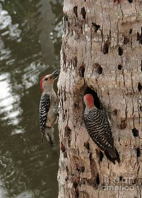 Celebrity Pop Art Potraits - Woodpeckers Busy with Baby by Barbie Corbett-Newmin