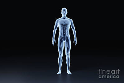 Revolutionary War Art - X-ray outline of man body front view. Medical and science illustration by Michal Bednarek