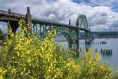 Royalty-Free and Rights-Managed Images - Yaquina Bay Bridge Scotch Broom Blooms by Darren White