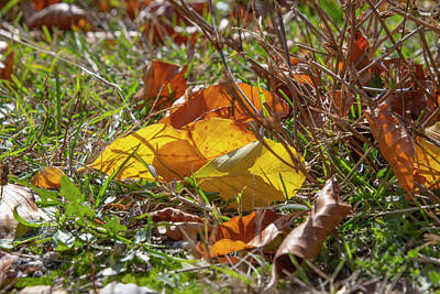 Keith Richards - Yellow and brown autumn leaves lying in the grass by Emma Grimberg