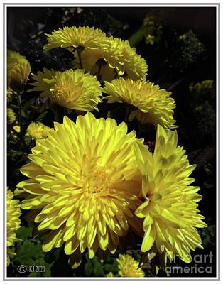 Polaroid Camera - Yellow Chrysanthemum by Klaus Jaritz