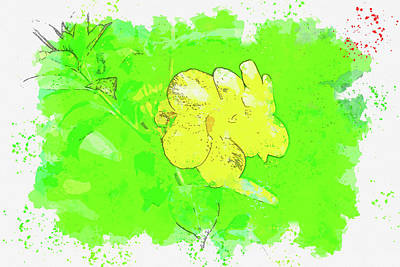 Royalty-Free and Rights-Managed Images - Yellow flower  - Watercolor ca 2020 by Ahmet Asar by Celestial Images