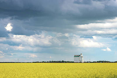 Photograph - Yellow Gold and the Storm by Steve Boyko