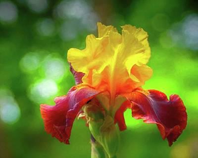 Photograph - Yellow Iris by Susan Rydberg