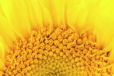 Venice Beach Bungalow - Yellow by Kyle Wasielewski