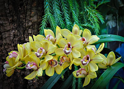 Sean - Yellow Orchids by David Beard
