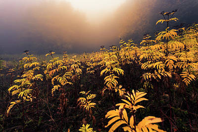 Patriotic Signs - Yellow Plants by Evgeni Dinev