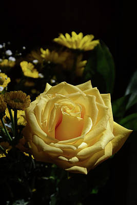A White Christmas Cityscape - Yellow Rose of Joy by Whispering Peaks Photography
