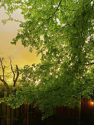 Photograph - Yellow Sky Green Leaves - Spring by Robert J Sadler