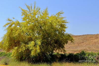 Just Desserts Rights Managed Images - Yellow Tree Along the Roadside Royalty-Free Image by Katherine Erickson