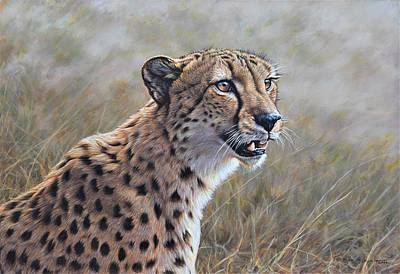 Animals Paintings - Young Male Cheetah by Alan M Hunt