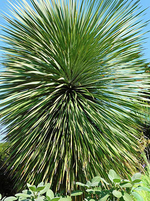 Old Masters - Yucca Rostrata Plant by Emmy Marie Vickers
