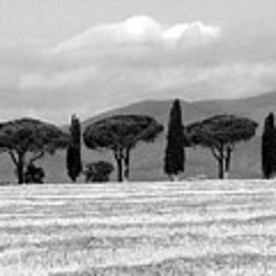 Tuscany Trees Art Print by Julian Perry