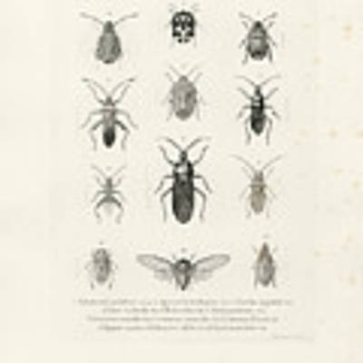 African Bugs And Insects Art Print by W Wagenschieber