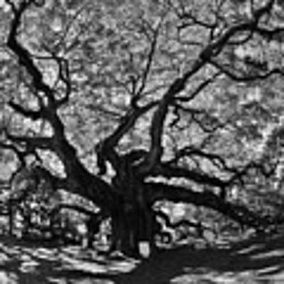 Angel Oak Johns Island Black And White Art Print by Lisa Wooten