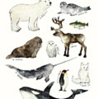 Arctic And Antarctic Animals Art Print