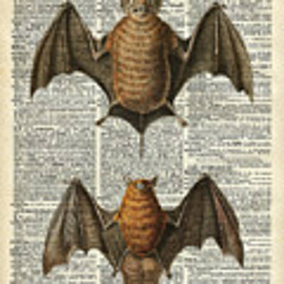 Bat Anatomy Animal Vintage Illustration Dictionary Art Art Print by Anna W