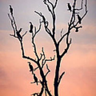 Before The Sunset Art Print by Niklas Rosenkilde