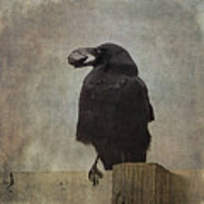 Beware Of Crows Art Print by Sally Banfill