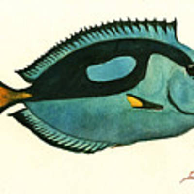 Blue Tang Fish Original by Juan Bosco