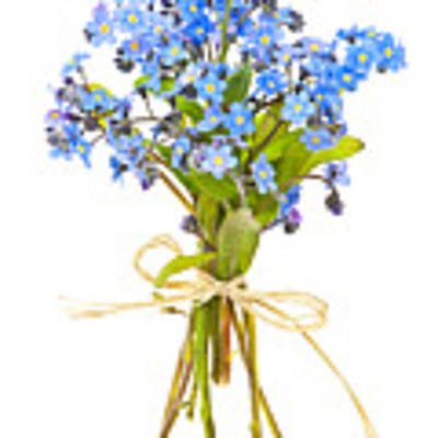 Bouquet Of Forget-me-nots Art Print