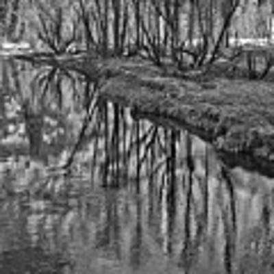 Branches Reflected In Yosemite Art Print by Priya Ghose