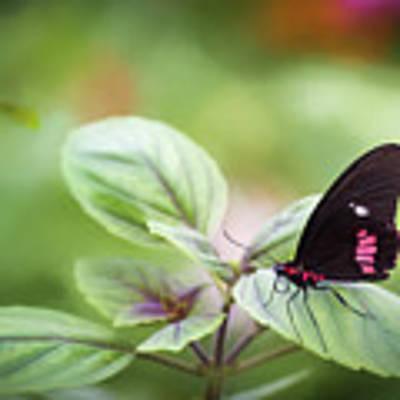 Brave Butterfly  Art Print by Cindy Lark Hartman