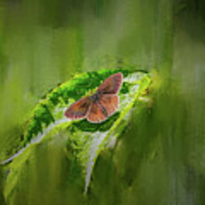 Brown Butterfly #h6 Art Print by Leif Sohlman