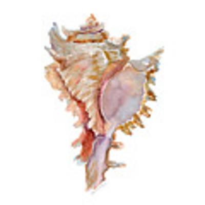 Chicoreus Ramosus Shell Art Print