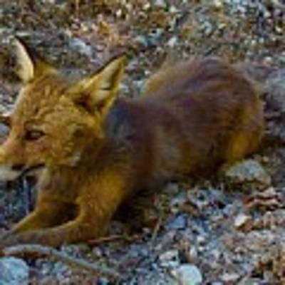 Cute Fox Friend  Art Print by Colette V Hera Guggenheim