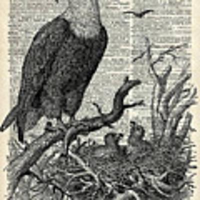 Eagle And Its Nest  Art Print
