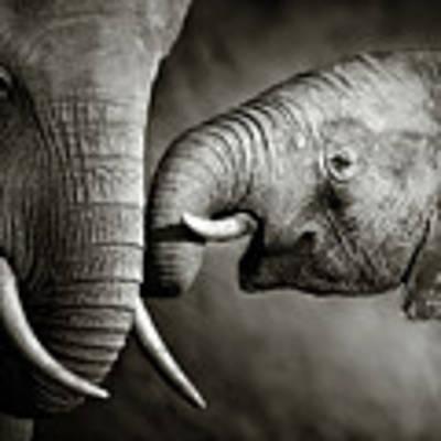 Elephant Affection Art Print