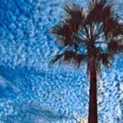 Fine Day In Spain  Art Print by Colette V Hera Guggenheim