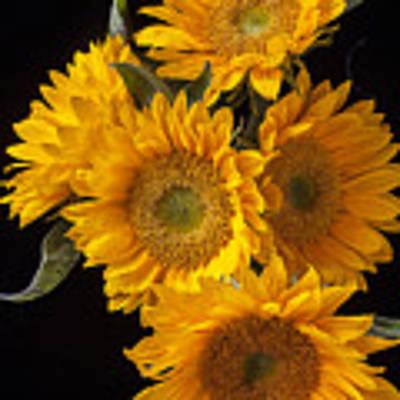 Five Sunflowers Art Print by Garry Gay