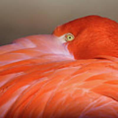 Flamingo Art Print by Michael Hubley