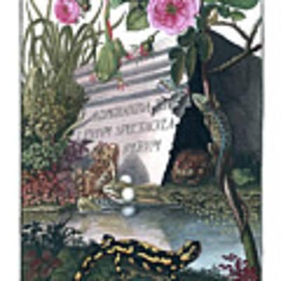 Frontis Of Historia Naturalis Ranarum Nostratium Art Print by ArtistAugust Johann Roesel von Rosenhof
