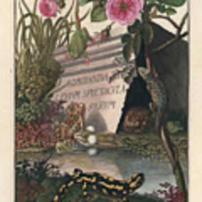 Frontis Of Historia Naturalis Ranarum Nostratium Art Print by August Johann Roesel von Rosenhof