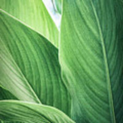 Green Leaves No. 2 Art Print by Todd Blanchard